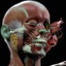 [CGMA] Character Facial Sculpting Week 7-8 [ENG-RUS]